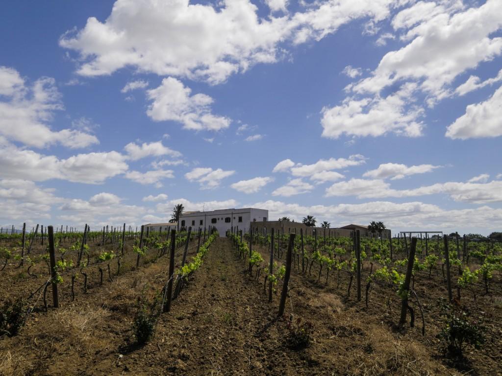 Le Baglio Donna Franca, au cœur des vignes