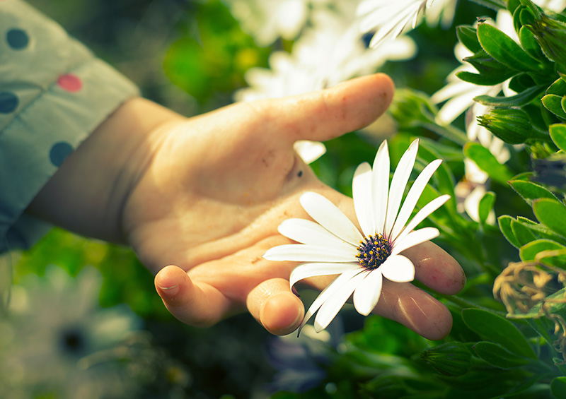 main-fleur